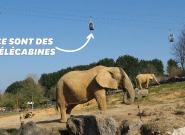 Au zoo de Beauval, la visite pourra désormais se faire dans les