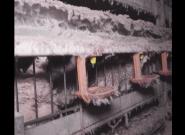 L214 filme les cailles en cage pour leurs oeufs dans une nouvelle
