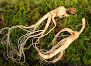 A Component In Ginseng May Help Fight