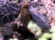 100年生きた「孤独なジョージ」ゾウガメ長寿の秘密は