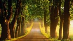 Hemel Hempstead - Seeing the Beauty in the