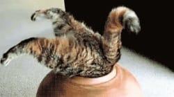 15 chats plus aventureux que