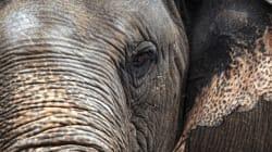 Wie geht es Elefantin 'Mali'