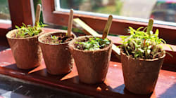 Top Tips for Caring for Your Plants Over the Christmas