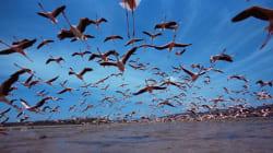 Sauvez les oiseaux