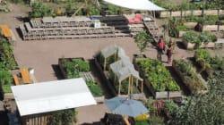 Gärtnern über den Dächern