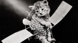 1915년, 고양이의 세계엔 무슨 일이
