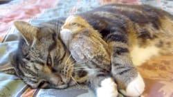 고양이와 새, 적과의 동침