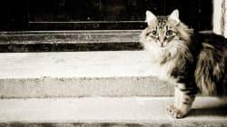 Un chat a donné la tuberculose à ses