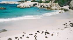 10 Gründe, Kapstadt zu