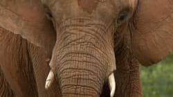 Budget 17: Tax Is The Biggest Elephant In The