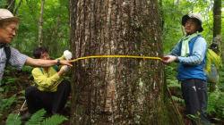 가리왕산 스키장 건설로 사라지는 나무와