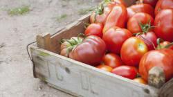 10 aliments que vous ne devriez pas ranger dans votre