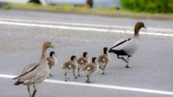 Renten-Enten: Riskanter Wahlkampf zu Lasten der nächsten