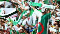 Le plus célèbre fan des Fennecs au Brésil savoure la victoire des Verts