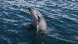 제돌이 바다로 돌려보낸 지 1년 : 멸종위기 흰고래들은 '수조감옥'