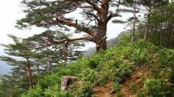 '오프라인 포토샵'   소나무