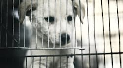 Are Dogs in Puppy Farms Any Better Off Than Those in