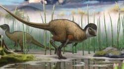 쥬라기 공원은 틀렸다 : 깃털 달린 공룡 화석 대거