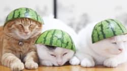 수박을 사랑한 동물들(GIF