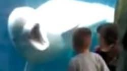 '까꿍!'으로 어린이들을 놀라게 한 돌고래