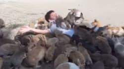 토끼섬에 가면 토끼 폭탄을 맞을 수