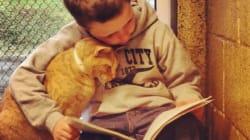 고양이에게 책을 읽어주는