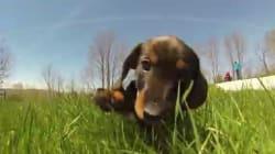 강아지의 눈높이로 세상을 보자!(고프로