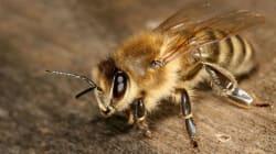 Ces mets que vous ne pourrez plus déguster si les abeilles