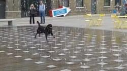 이 개에게 분수는 세상 최고의 행복이다