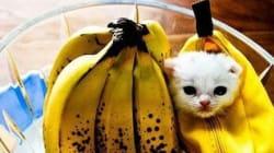 끔찍하게 귀여운 애완동물의 할로윈 복장
