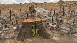 La déforestation de la planète a