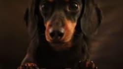 닥스훈트 강아지가 좀비 게임을