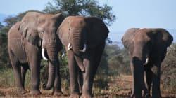코끼리 똥이 세상을