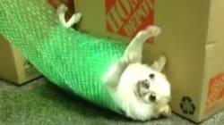 뽁뽁이 김밥이 되어버린 강아지