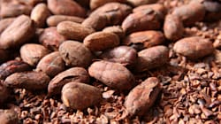 How Is Chocolate Made And What Are Cocoa Beans