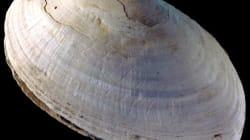 Préhistoire: Voici la plus vieille gravure humaine connue à ce jour - PHOTOS