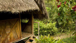 Top Seven Amazing Hotels to Continue Your Jungle