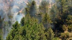 Σε 24 ώρες κρίνεται το μέλλον των δασών: Το Σάββατο η ψηφοφορία στη