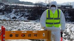 충북 구제역, 돼지 1만5천마리