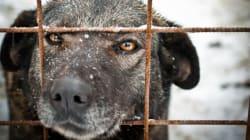 동물보호단체