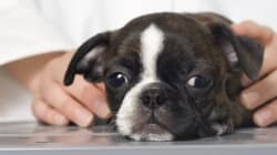 Open Letter to Pets At Home, 20th March