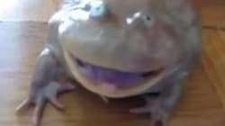 개구리의 비명소리를