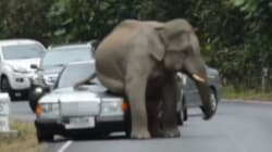 Éléphant 1 - Voiture