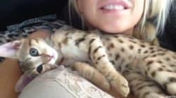 고양이는 가슴을