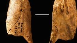 La découverte d'un outil préhistorique remet en cause l'évolution