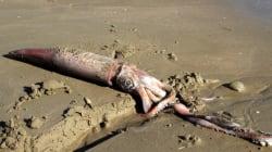 Η θάλασσα ξέβρασε