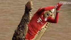 Robben mordu par un crocodile? La blague du Néerlandais inspire