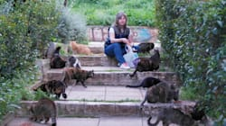 Οι «Επτάψυχες» φροντίζουν τις αδέσποτες γάτες της