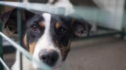 Κύκλωμα αιχμαλώτιζε σκυλιά για να τα διαθέσει σε οίκους ανοχής στη
